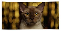 Beach Towel featuring the photograph Closeup Portrait Burmese Cat On Happy New Year Background by Sergey Taran