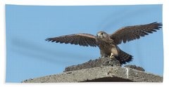 Beach Towel featuring the photograph Common Kestrel Juvenile - Falco Tinnunculus by Jivko Nakev