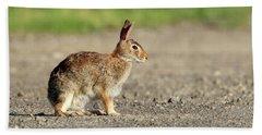 Cottontail Rabbit Stony Brook New York Beach Sheet
