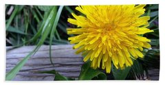 Beach Towel featuring the photograph Dandelion by Robert Knight