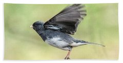 Dark Eyed Junco Flying Beach Sheet