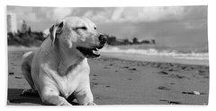 Dog - Monochrome 5  Beach Sheet