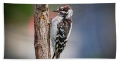 Downy Woodpecker Beach Towel
