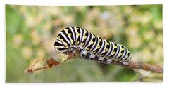 Eastern Black Swallowtail Caterpillar  Beach Towel