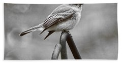 Beach Towel featuring the photograph Eastern Phoebe by Robert L Jackson