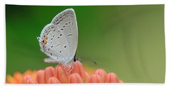 Eastern Tailed Blue On Butterfly Weed Beach Towel