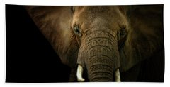 Elephant Against Black Background Beach Towel by James Larkin