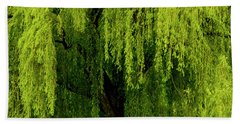 Enchanting Weeping Willow Tree  Beach Towel