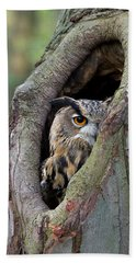 Eurasian Eagle-owl Bubo Bubo Looking Beach Towel by Rob Reijnen