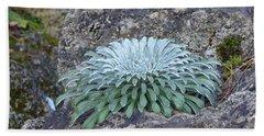 Exotic Plant Beach Sheet
