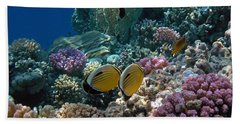 Exquisite Butterflyfish In The Red Sea Beach Sheet