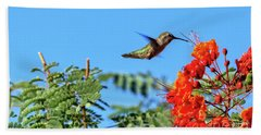 Feeding  Anna's Hummingbird Beach Towel by Robert Bales