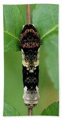 Giant Swallowtail Caterpillar Beach Towel