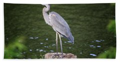 Great Blue Heron Beach Towel by Gary Hall