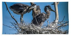 Great Blue Heron On Nest Beach Towel
