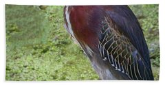 Green Heron Beach Towel