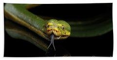 Green Tree Python. Morelia Viridis. Isolated Black Background Beach Sheet