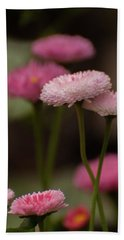 Beach Towel featuring the photograph Habanera English Daisy by Brenda Jacobs