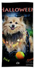 Halloween Dog Beach Sheet