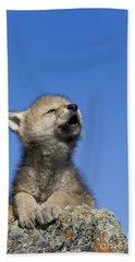 Howling Wolf Cub Beach Towel