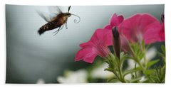 Hummer Moth Beach Towel