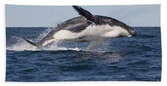 Humpback Whale Calf Breaching Beach Sheet