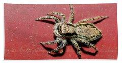 Jumping Spider Beach Sheet