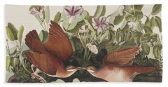 Key West Dove Beach Towel by John James Audubon