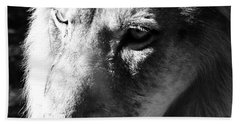 King Of The Jungle Majestic Lion Head Face Eyes Square Macro Beach Towel