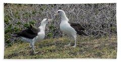Laysan Albatross Hawaii #2 Beach Towel