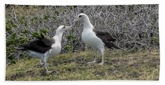 Laysan Albatross Hawaii #2 Beach Towel