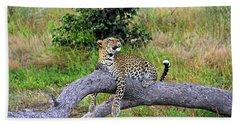 Leopard - Botswana, Africa Beach Towel