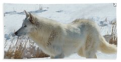 Lone White Wolf Beach Towel