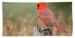 Beach Towel featuring the photograph Male Cardinal by David Waldrop