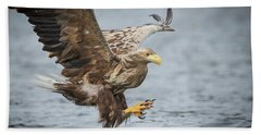 Male White-tailed Eagle Beach Towel
