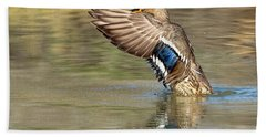 Mallard Duck Female Beach Towel by Tam Ryan