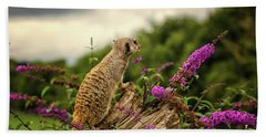 Meerkat Lookout Beach Towel by Martin Newman