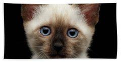 Mekong Bobtail Kitty With Blue Eyes On Isolated Black Background Beach Sheet