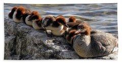 Merganser Family Beach Towel