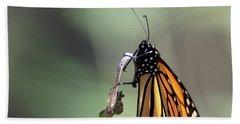 Monarch Butterfly Stony Brook New York Beach Towel by Bob Savage