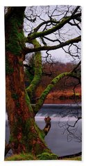Mossy Tree Leaning Over The Smooth River Wharfe Beach Towel
