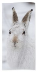 Mountain Hare In The Snow - Lepus Timidus  #1 Beach Sheet