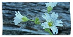 Beach Towel featuring the photograph Mouse-eared Chickweed by Ann E Robson