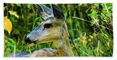 Mule Deer Beach Sheet