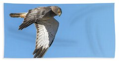 Beach Towel featuring the photograph Northern Harrier by Tam Ryan