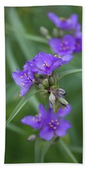 Ohio Spiderwort Beach Sheet
