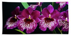 Orchid Miltonia Beach Towel by Lana Enderle