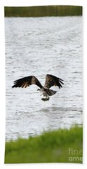 Osprey Fishing In The Afternoon Beach Towel by Carol Groenen