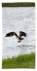 Osprey Fishing In The Afternoon Beach Sheet by Carol Groenen