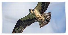 Osprey With Catch Beach Sheet